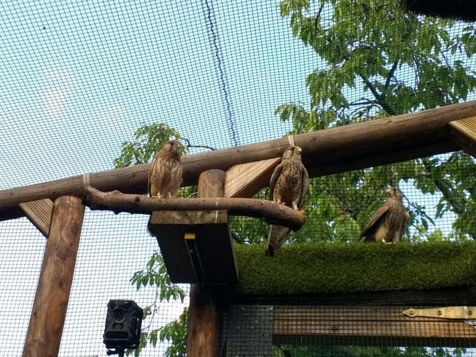 Jungvögel, die von ihren Eltern nicht mehr versorgt werden, müssen stationär aufgenommen werden, wofür die Kapazität in der Wildvogelhilfe Leipzig begrenzt ist. Foto: NABU Leipzig