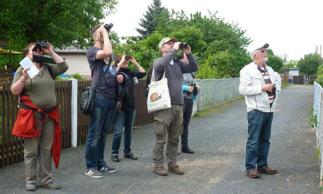 """Der NABU Leipzig hatte zur """"Stunde der Gartenvögel"""" wieder zu verschiedenen Exkursionen eingeladen; eine führte durch die Kleingartenanlage """"Nordvorstadt"""". Foto: Daniela Dunger"""