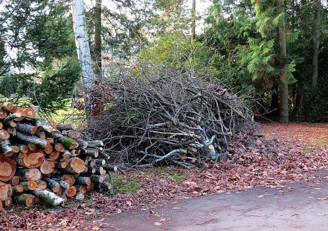 Lebensraum Totholzhaufen auf dem Leipziger Südfriedhof