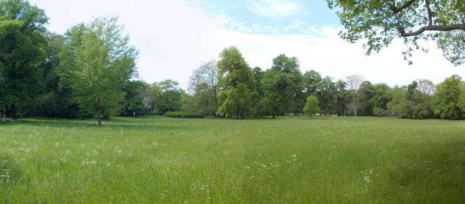 Stunde der Gartenvögel im Clara-Zetkin-Park. Der NABU Leipzig setzt sich hier für die Förderung der Biodiversität und eine naturnahe Parkpflege ein. Foto: René Sievert