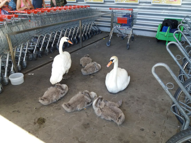 Tierische Falschparker vor dem Supermarkt. Foto: Karsten Peterlein