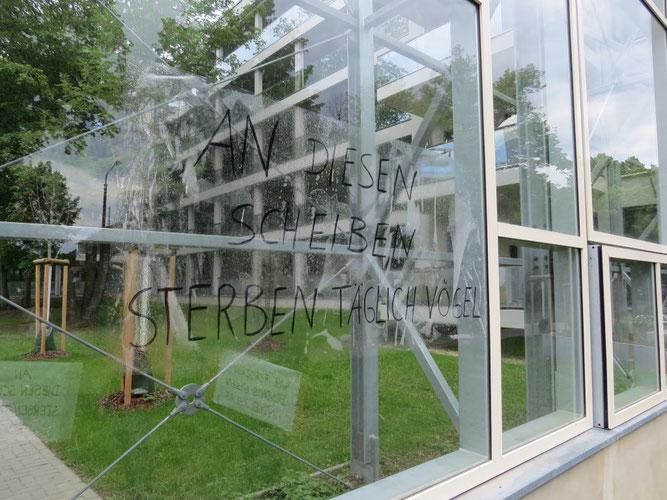 Die Schallschutzwand aus Glas ist für Vögel unsichtbar. Foto: NABU Leipzig
