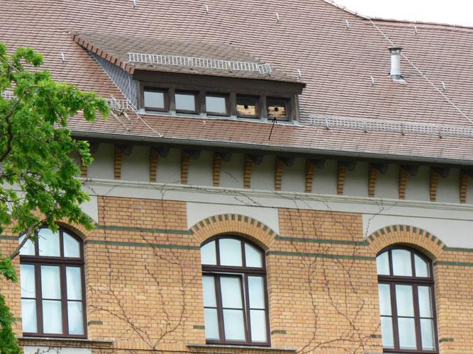 Turmfalken-Nistplatz in der Apollonia-von-Wiedebach-Schule. Foto: NABU Leipzig