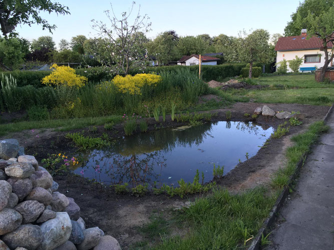 Wertvoller Lebensraum für Amphibien - periodisch trockenfallendes Gewässer