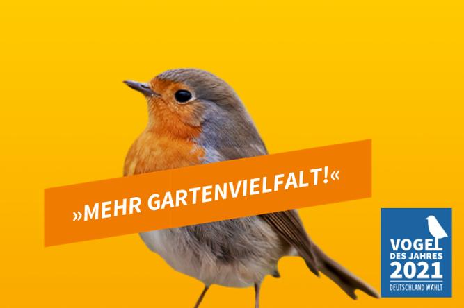 Rotkehlchen - Vogel des Jahres 2021