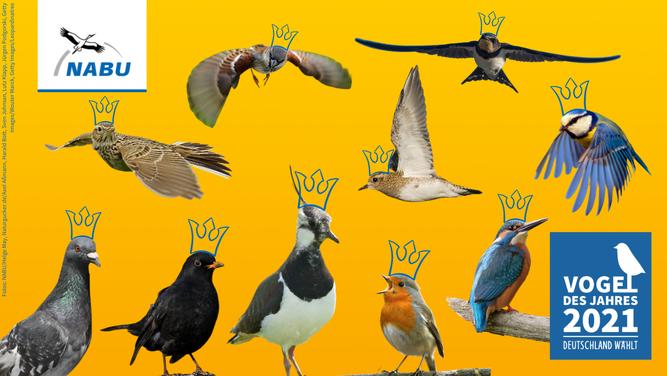 """Die Hauptwahl zum """"Vogel des Jahres"""" 2021 läuft noch bis zum 19. März"""