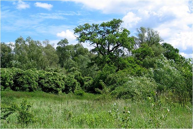 """NABU-Schutzgebiet """"Grünaue bei Eltville"""" - Foto: Hartmut Mai"""