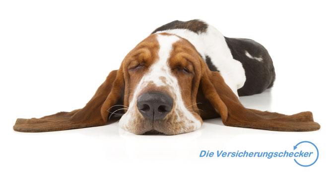 Beste Hunde-OP-Versicherung Hundekrankenversicherung Tierhalterhaftpflichtversicherung