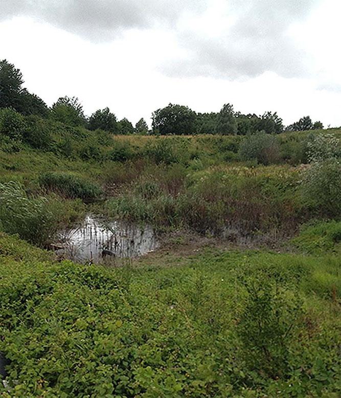 Lebensraum des Kammmolches in der Lonniger Tongrube