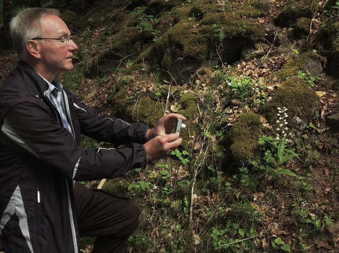 Stefan Frieb-Preis fotografiert ein Weißes Waldvögelein