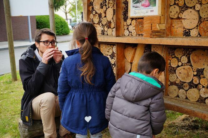 Am Wildbienenhotel gibt es viel zu entdecken. Glücklicherweise sind die Tiere nicht aggresiv! Foto: Sarah Schramme