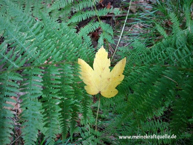 Herbstwald, Kraftquelle, buntes Laub, Wald in Hessen, Waldleben, Waldbaden, Kinder im Wald
