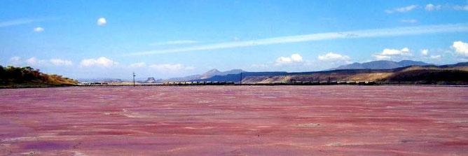 Le acque rosa del Lago Magadi, Kenya