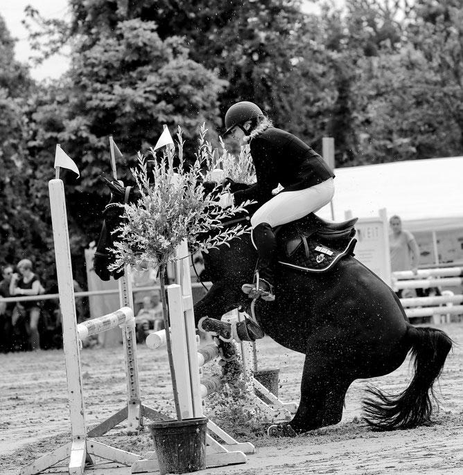 Pferdesport reiten Pferde Springreiten