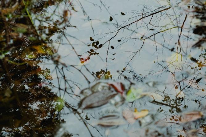 明治神宮 宝物殿への道 水辺の落葉