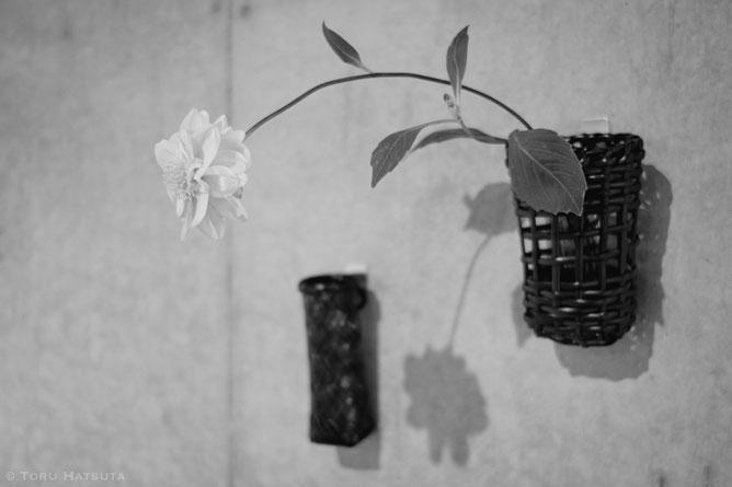 籠と花 展より。籠は初田徹 作、花は平井かずみさん