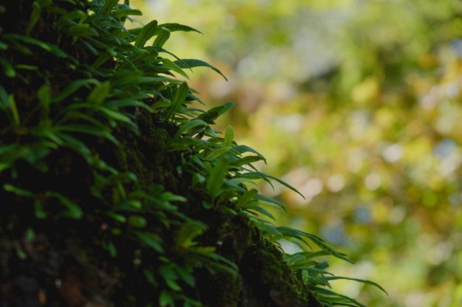 シダ植物の向こうに秋の色