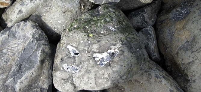 Graue Felsen in der Talisker Bay