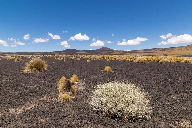 In der wüstenartigen Region Cuyo im zentralen Westen Argentiniens regnet es selten