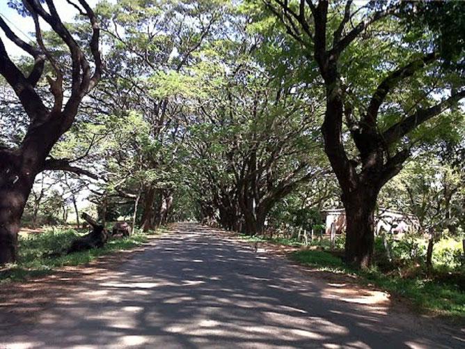 Une paisible et familière route de province.