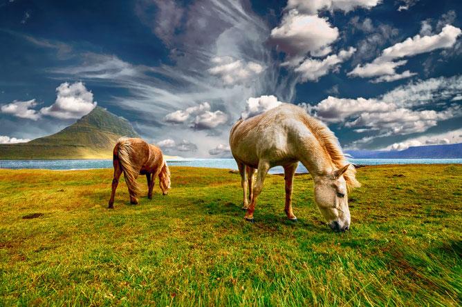 Pferde grasen auf der Weide