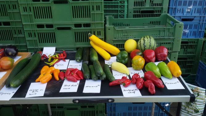 Gemüsesorten in den verschiedenen Farben und Formen