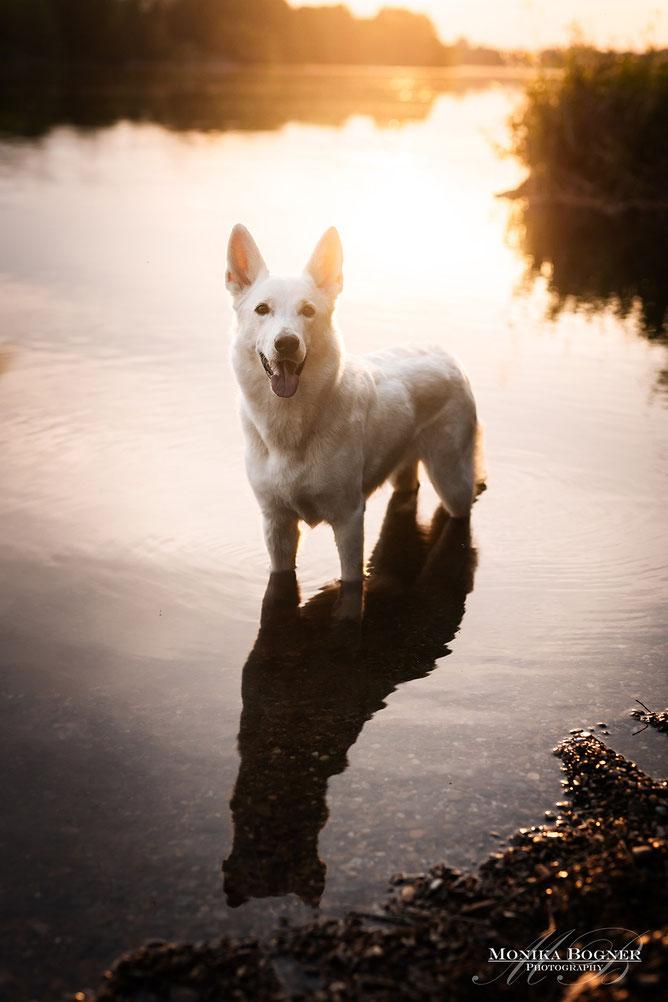 Mensch und Hund Fotoshooting