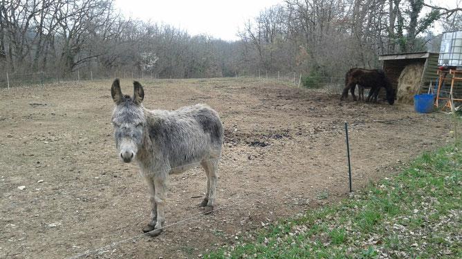 Mon ami l'âne s'ennuie : il vient me saluer, et j'en fait de même, chaque fois que, lors d'une balade, je passe à côté de son (bien maigre !) parc !