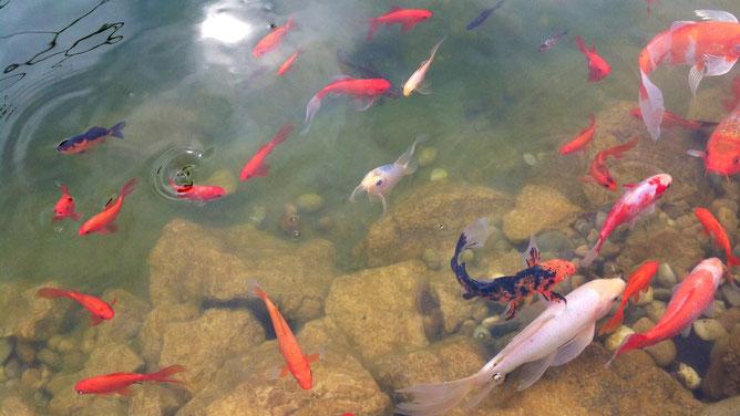 Рыбки активизировались и набираются сил после зимы