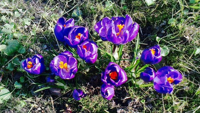 Первые мартовские цветочки