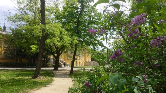Вдыхая пьянящие ароматы сирени иду по дорожке к желтому дворцовому комплексу