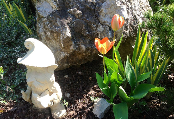 Птицелов-охранник и тюльпаны-соседи. Утренний обход. Все в порядке в цветочном оазисе