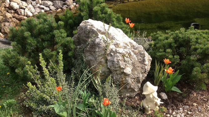 Мартовская картинка. Тюльпаны цветут, ирисы готовятся, подрастают.