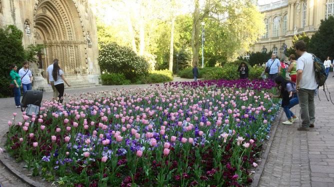 Тюльпаны,  замок Вайдахуняд, Будапешт