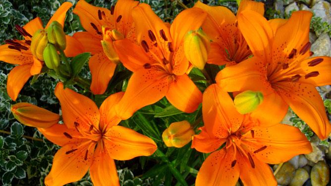 Оранжевое настроение - лето
