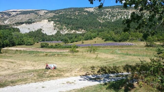 奥にラベンダー畑が2区画見えます。