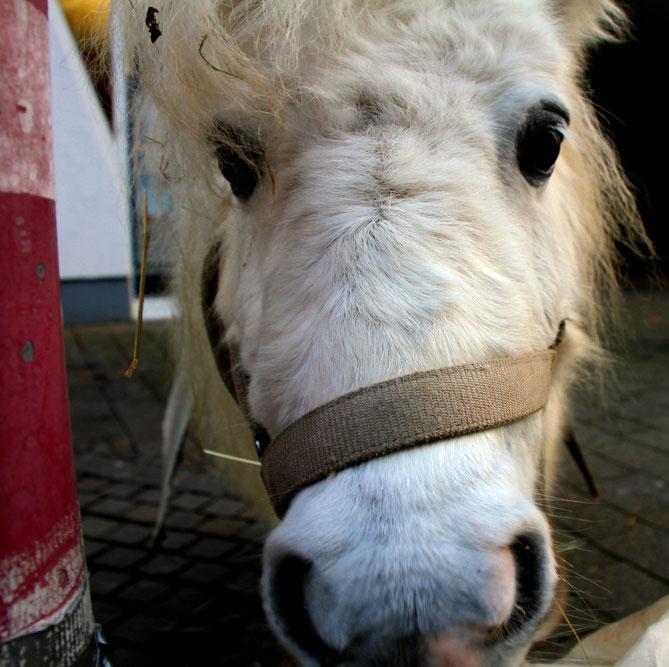 Pony aus Merzig