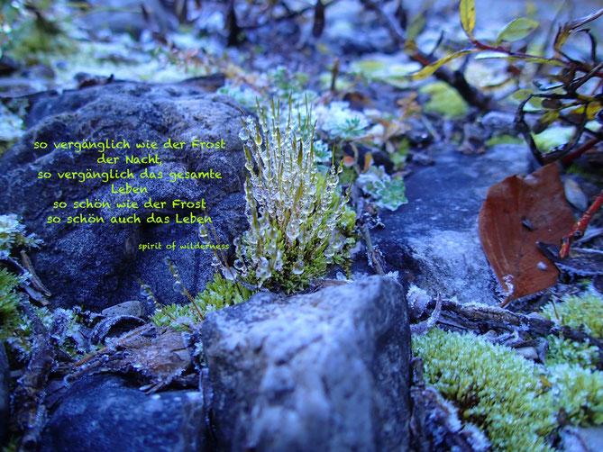 """Die Natur am Morgen mit Nachtfrost. Auf dem Bild der Spruch """"so vergänglich wie der Frost der Nacht, so vergänglich das gesamte Leben, so schön wie der Frost, so schön auch das Leben!"""""""