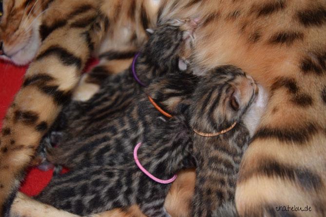1 Tag alt - Aela trägt hier das rosafarbige Halsband