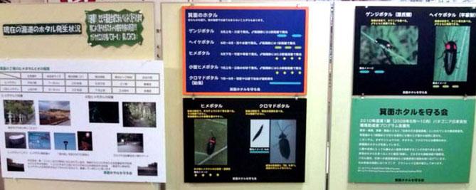 箕面のホタルなどについて、詳しく展示
