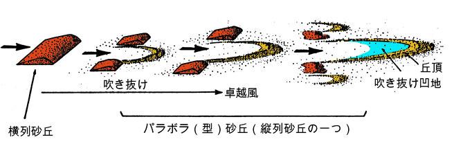 図2 パラボラ型砂丘の出来方(諸文献を総合して作成:遠藤、1987)