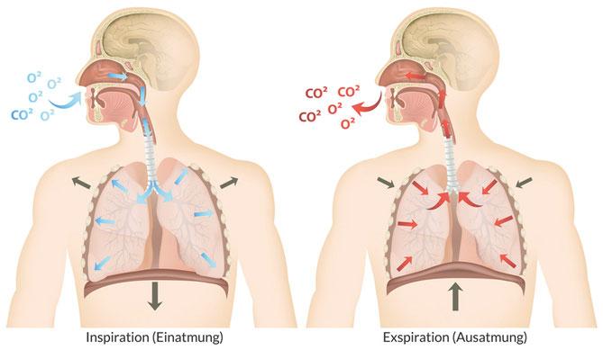 Buteyko – mehr Sauerstoff für Ihre Zellen