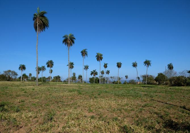 Typische paraguayische Landschaft