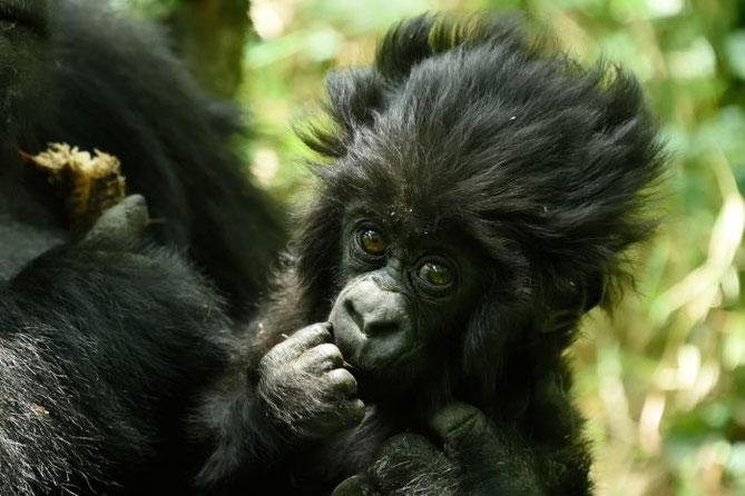 visit-Rwanda-kwita-izina-baby-gorilla.jpg