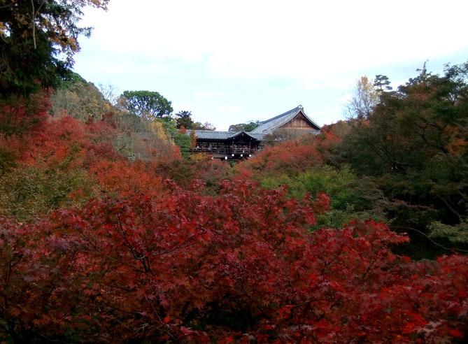Les érables du Tōfuku-ji et le Tsūten-kyō (pont de bois couvert)