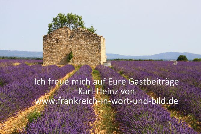 Bild: Lavendelfeld auf dem Plateau Valensole, Provence