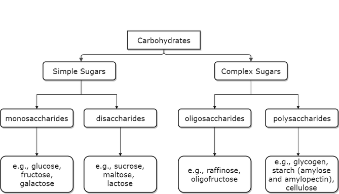 Carbohydrate tree diagram