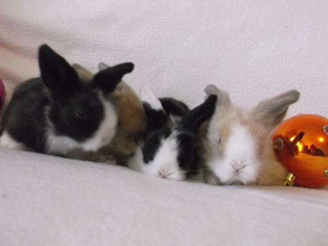 """Les bébés de Shade & Malabar de gauche à droite : """"Alpina, Teddy, Heaven et Caramel"""""""