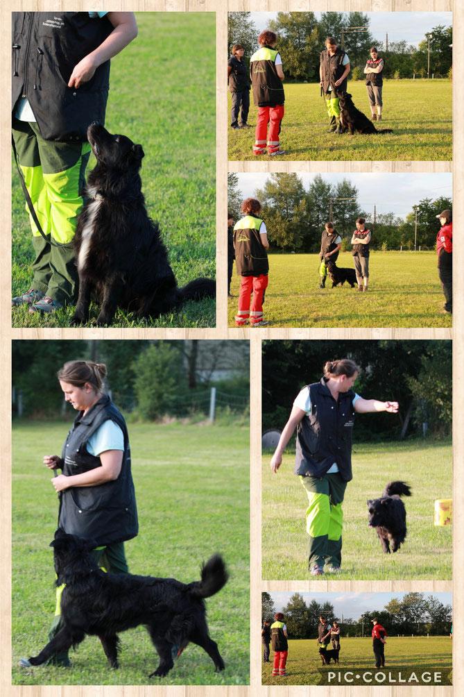 Training am Hundeplatz