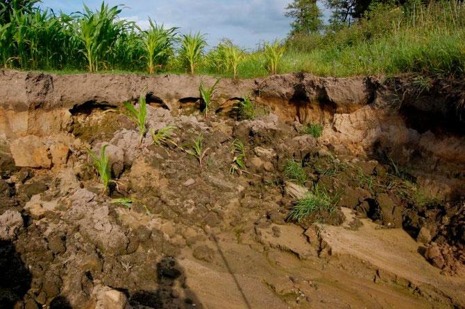 A) 2m tiefe und 8x9m messende Bodenauswaschung durch Stauwasserabfluss Richtung Bachschlucht (17.7.2013)